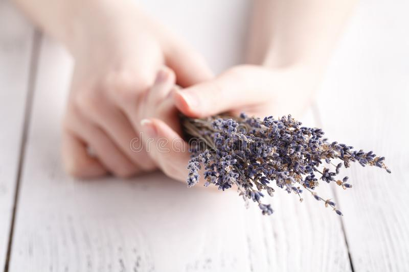 Female hands hold bunch of dry lavender royalty free stock photos