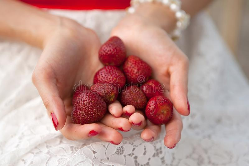 Female hands hold a handful of strawberries royalty free stock image