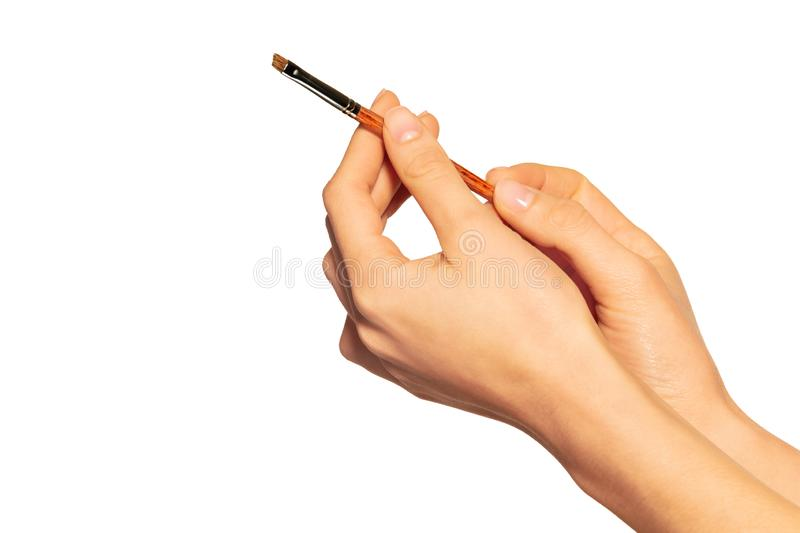 Female hands holding angled eyebrow brush on white royalty free stock image