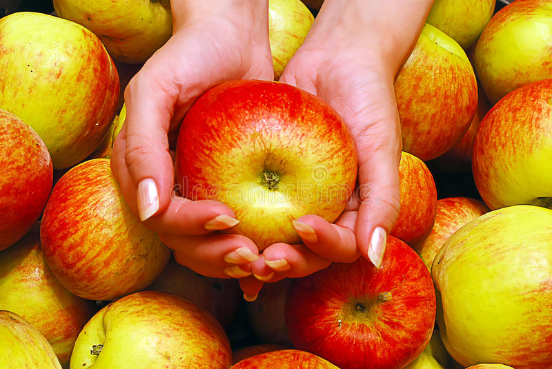 Download Female Hands Holding Apple stock image. Image of health - 29583941