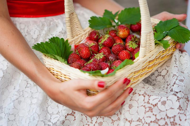 Female hands holding a basket of strawberries stock photos