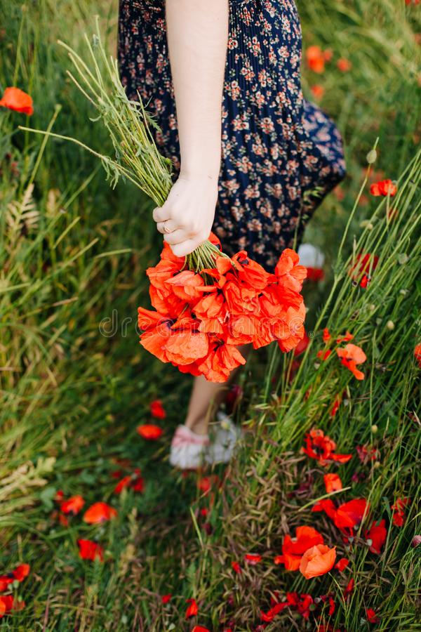 Female hands holding a bouquet of red poppy stock photography