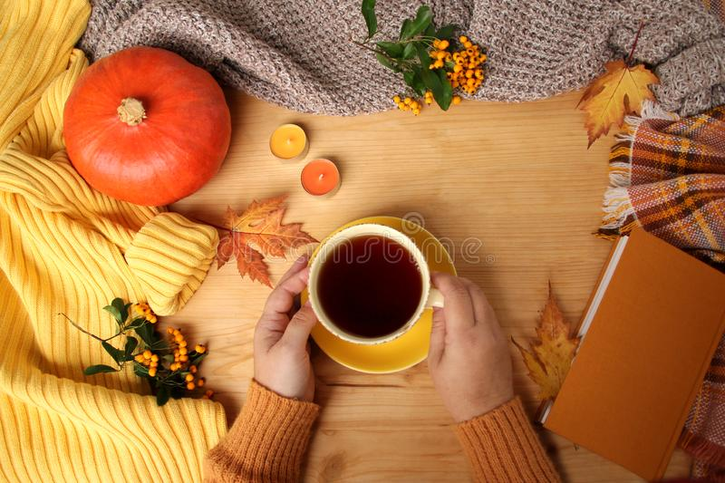 Female hands holding a cup of hot tea or coffee, autumn flat in the Scandinavian hugg style, with yellow leaves, cozy knitwear,. Pumpkin and berries stock images