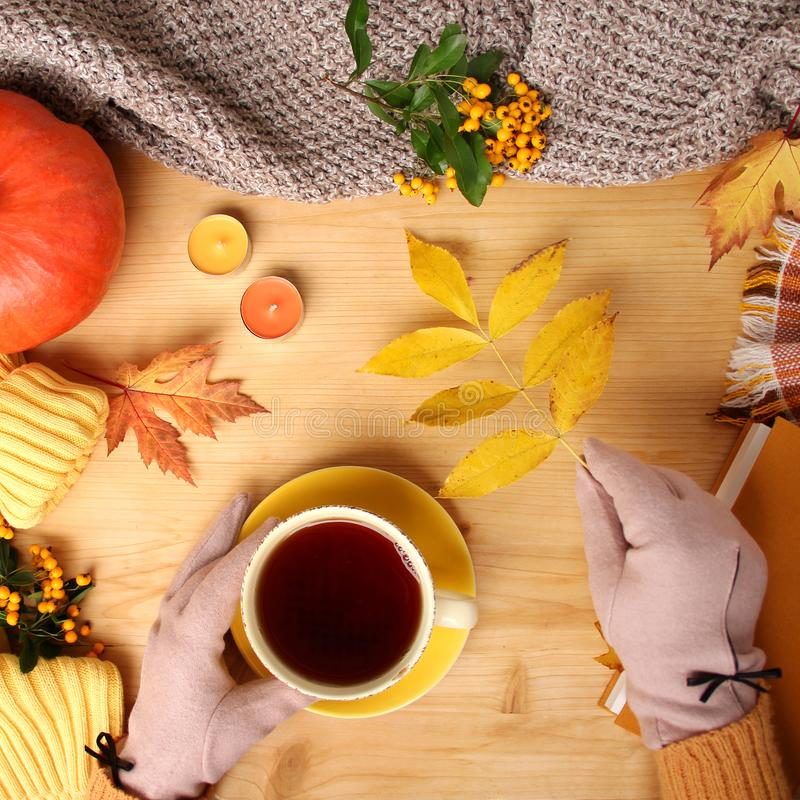 Female hands holding a cup of hot tea or coffee, autumn flat in the Scandinavian hugg style, with yellow leaves, cozy knitwear,. Pumpkin and berries royalty free stock images