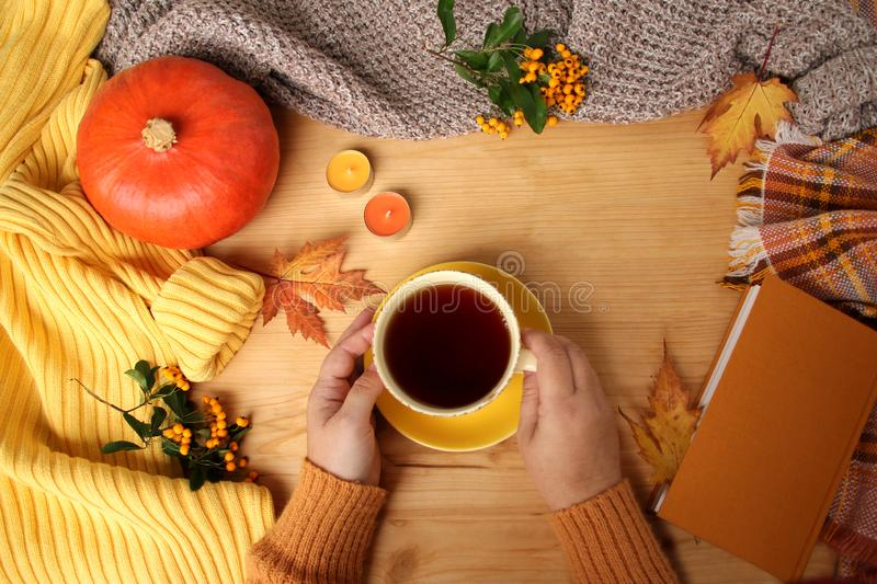 Female hands holding a cup of hot tea or coffee, autumn flat in the Scandinavian hugg style, with yellow leaves, cozy knitwear,. Pumpkin and berries royalty free stock photography