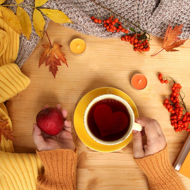 Female hands holding a cup of hot tea or coffee, autumn flat in the Scandinavian hugg style, with yellow leaves, cozy knitwear,. Candles and berries, a blank stock images