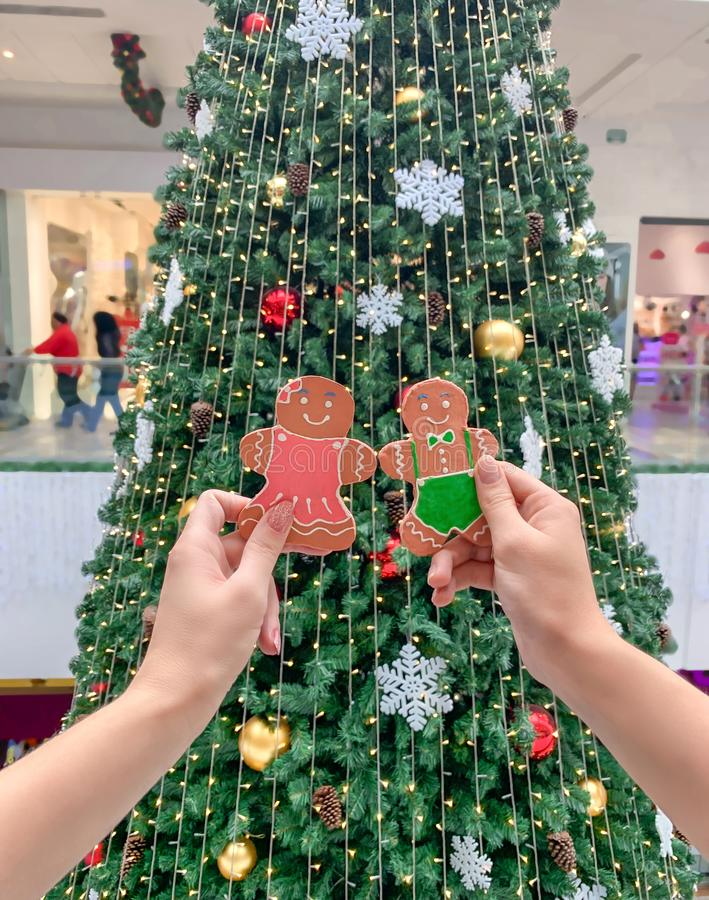 Female hands holding a gingerbread man gingerbread cookie on the background of the Christmas tree. Festive background royalty free stock photos
