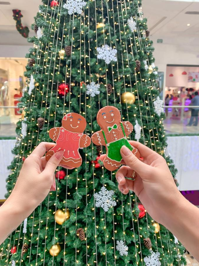 Female hands holding a gingerbread man gingerbread cookie on the background of the Christmas tree. Festive background royalty free stock photo