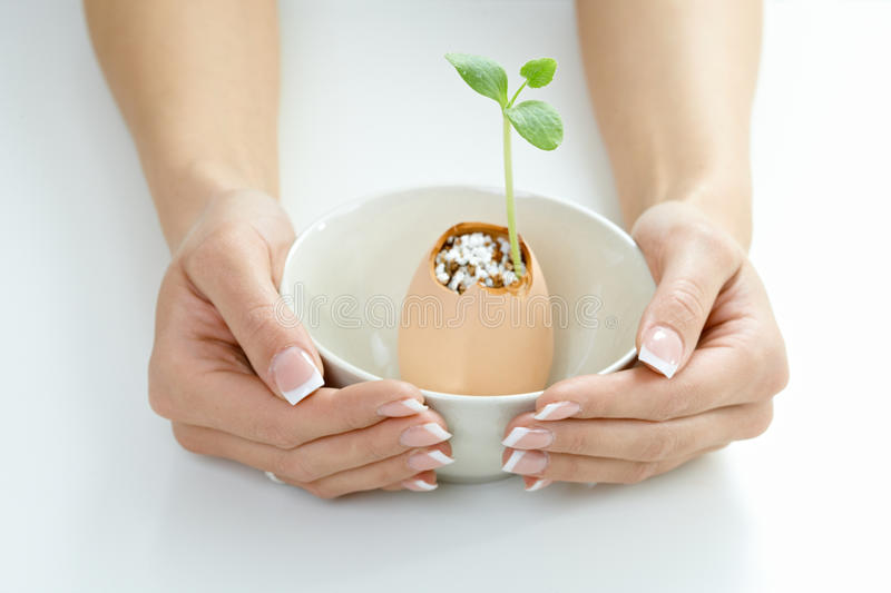 Female Hands Holding Green Plant Royalty Free Stock Photography