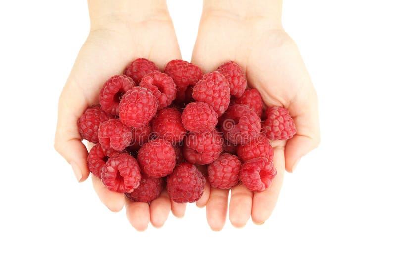 Hands holding raspberries royalty free stock photo