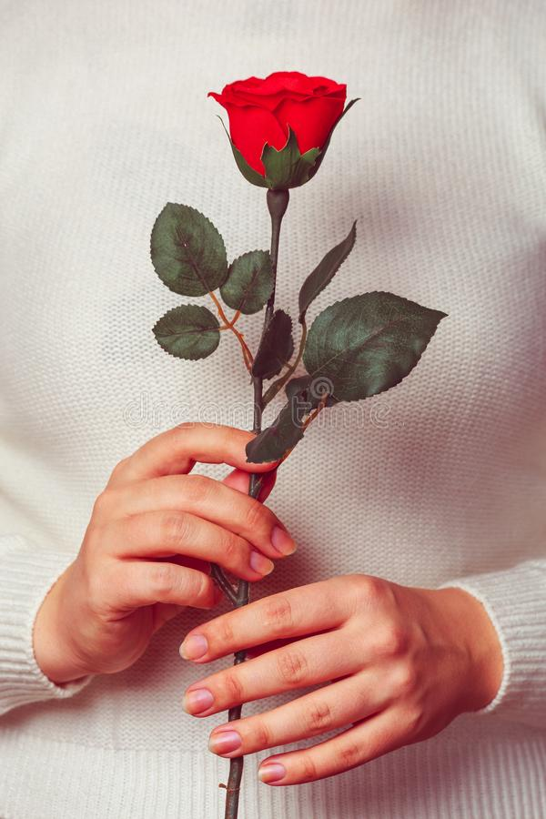 Female hands holding red rose as symbol of love at Valentines day. Young woman stock photo
