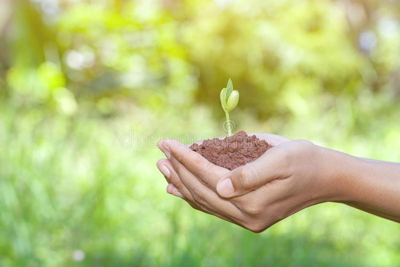 Female hands holding tree growing stock photo
