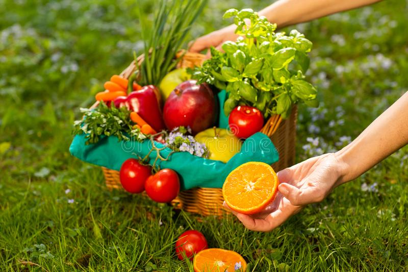 Female hands holding wicker basket with vegetables and fruits, close up stock photo