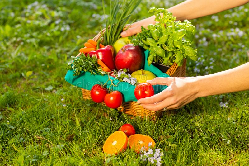 Female hands holding wicker basket with vegetables and fruits, close up royalty free stock photo