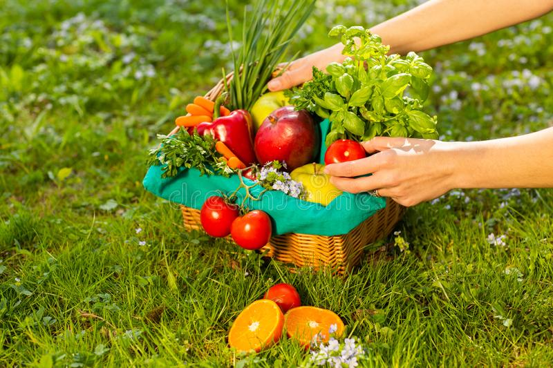 Female hands holding wicker basket with vegetables and fruits, close up stock image