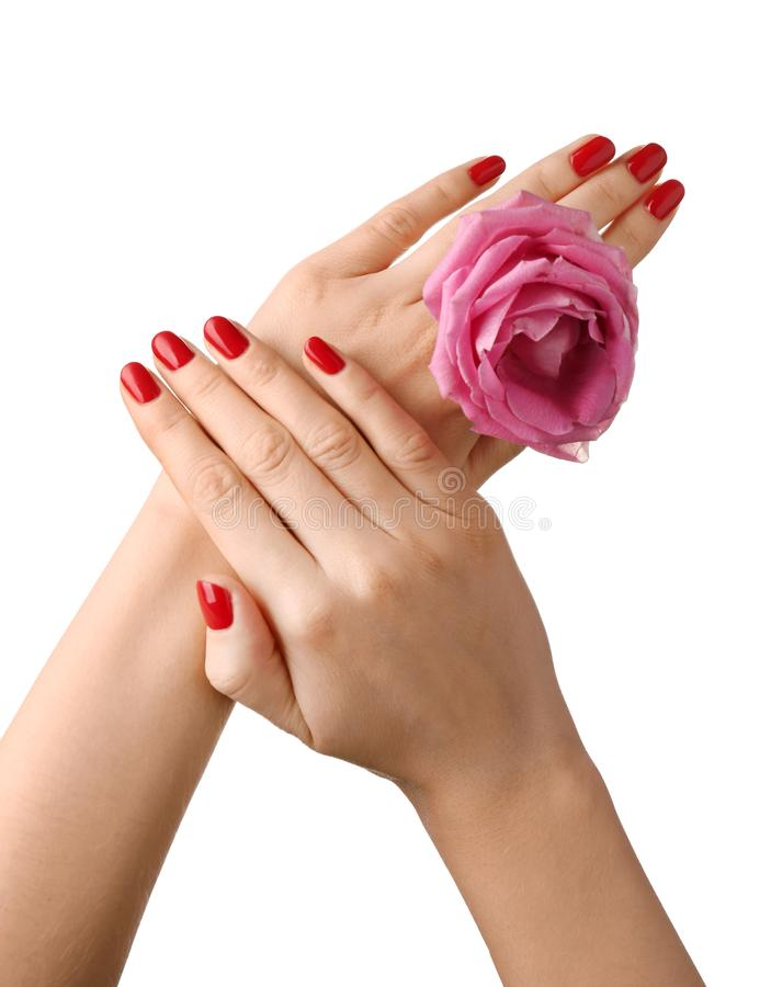 Female hands with manicure holding rose on white background stock images