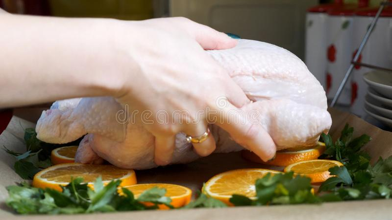 Female hands placing whole raw chicken to baking tray tin in kitchen.  royalty free stock photography
