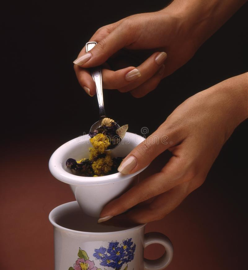 Preparation of a floral infusion stock image