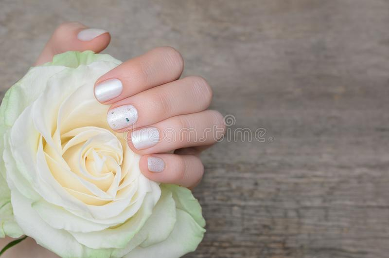 Female hands with white nail design holding white rose stock images
