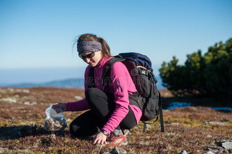 Female hiker collecting herbs a sunny day in the mountains royalty free stock image
