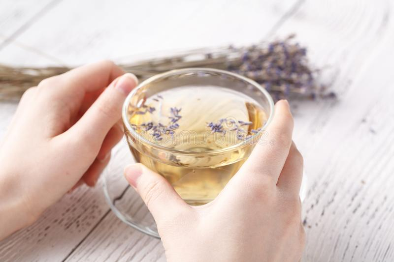 Female hold hot aromatic herbal tea royalty free stock images