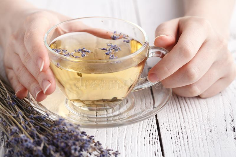 Female hold hot aromatic herbal tea stock images