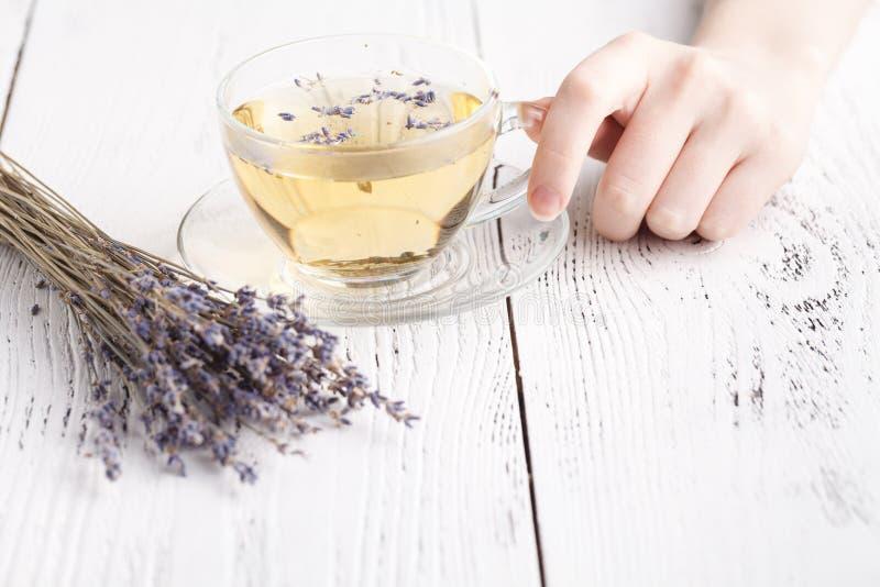 Female hold hot aromatic herbal tea stock photo
