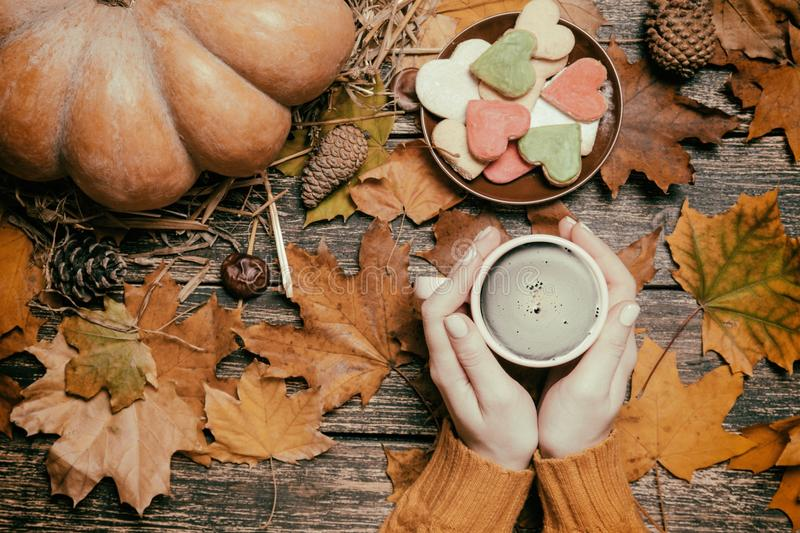 Female holding cup of coffee near cookies on autumn background. royalty free stock photography