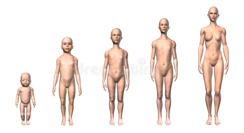 Female human body scheme of different ages stages. royalty free illustration