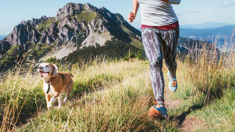 Female jogging by the mounting range path with her beagle dog. Canicross running healthy lifestyle concept image stock photos