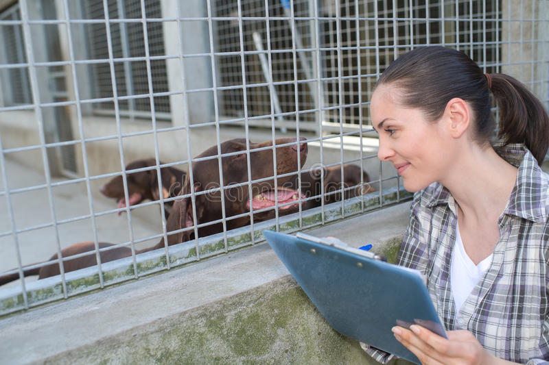 Female kennel employee checking dogs state. Female kennel employee is checking dogs state stock photo