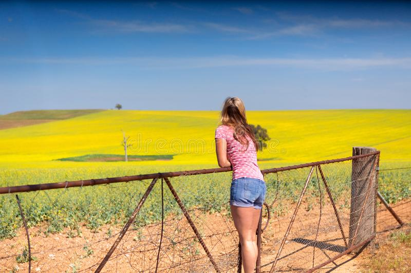 Female leaning on farm gate looks over rolling hills farmlands of golden canola royalty free stock photo