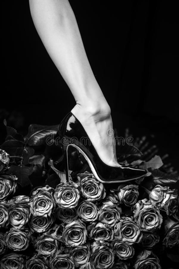 Female legs concept. Black shoes and black roses. Beautiful body of woman against petals of black roses with flower royalty free stock photography
