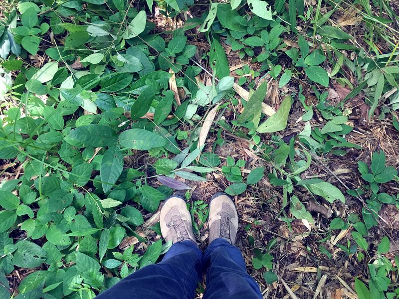 Female legs and feet in blue jeans and brown sneakers standing on the ground of wilderness forest with green shrub and sapling royalty free stock images
