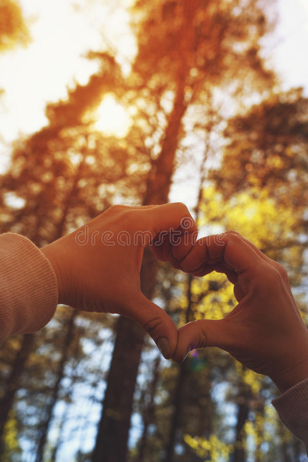 Female making heart with her hands. On the background of forest trees and sunny sky stock photos