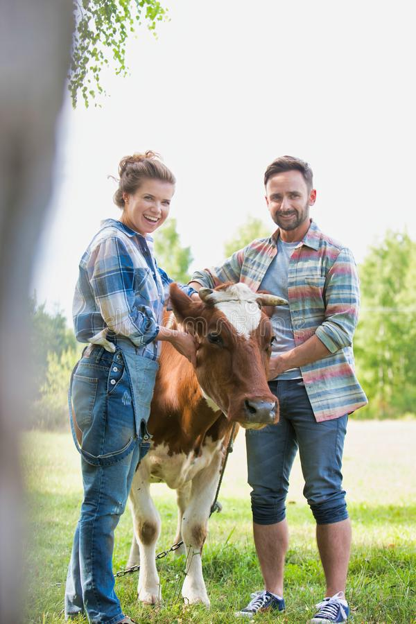 Female and male farmers checking on their cows on their farm, concept family organic farm royalty free stock photo