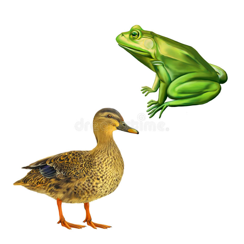 Free Female Mallard Duck, Green Frog With Spots, Toad Stock Image - 50998991