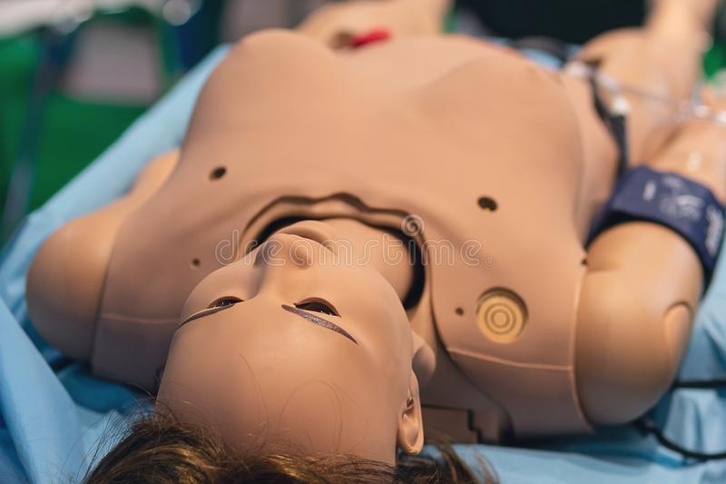 Female mannequin as a medical benefit. Hospital stock photos