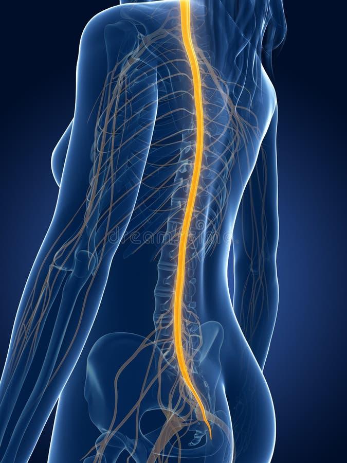 Female nerves stock illustration