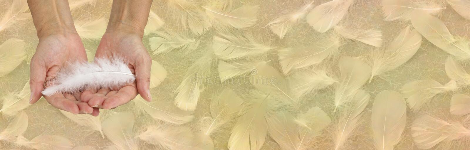 Receiving Angelic help golden feather background banner. Female open hands gently holding a single white feather against a wide soft gold coloured background of stock image
