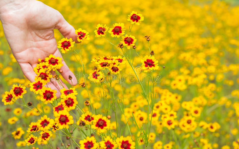Female palm touching wildflowers stock photography