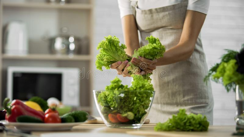 Female preparing green salad, tearing it and putting in glass bowl, calories stock photos