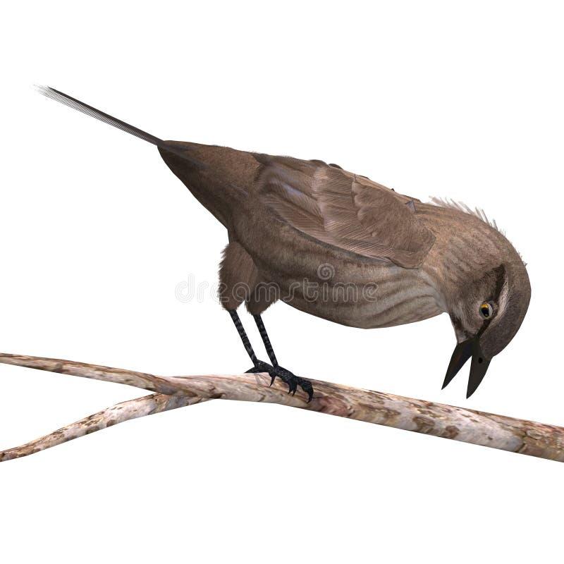 Free Female Red-winged Blackbird Stock Photo - 15107590
