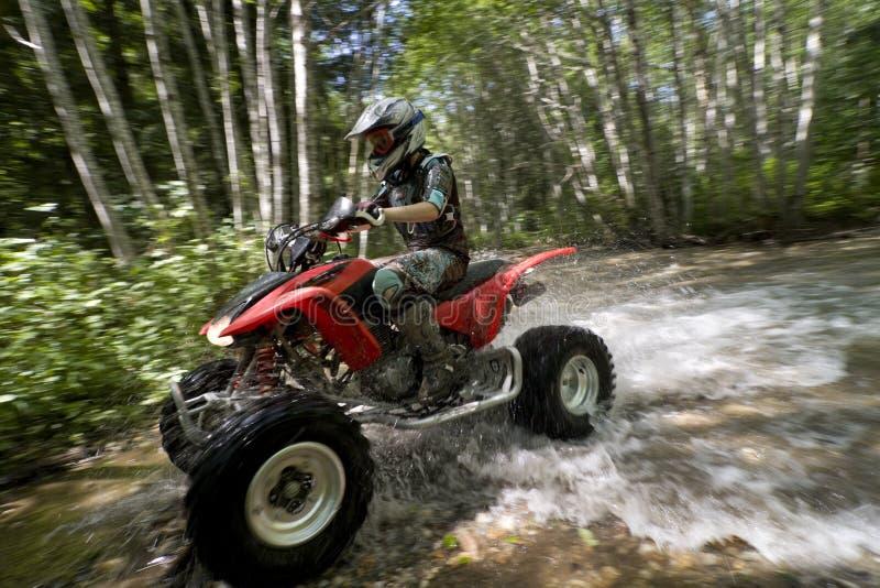 Female riding ATV through creek stock image