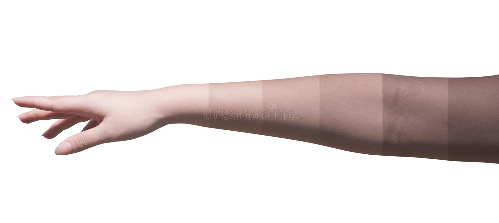 Female's hand stretched out to show how the skin turn brighter Isolated on white. Clipping path. This is a picture of skin that turn from black to white stock image
