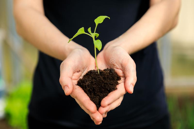 Female`s hands holding young plant stock photography