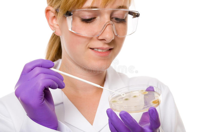 Female scientist check bacterium on agar jelly. Young scientist checking bacterium colony on agar jelly, studio shoot isolated on white background stock photo