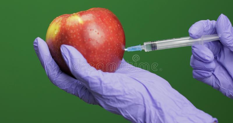 Female scientist makes a injection with a medicine syringe in apple. Female scientist holding syringe with medicines in one hand and an apple in other hand royalty free stock photos