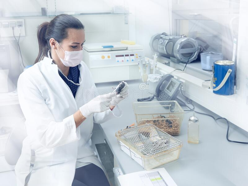 Female scientist performs animal testing in modern laboratory, academic research or industrial facility.  royalty free stock photos