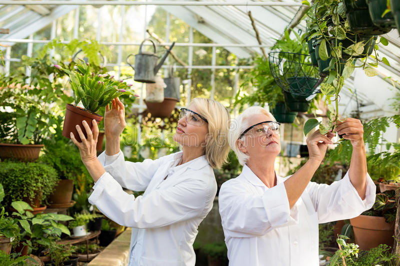 Female scientists examining potted plants stock photography